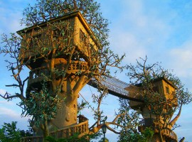 tree-house-cool-nature-architecture3