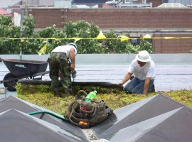 14b Green Roof Installation at Kresge Library, Ross School of Business at the University of Michigan-cseeman
