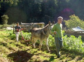 l'orto biologico dell'Ecovillaggio di Torri Superiori