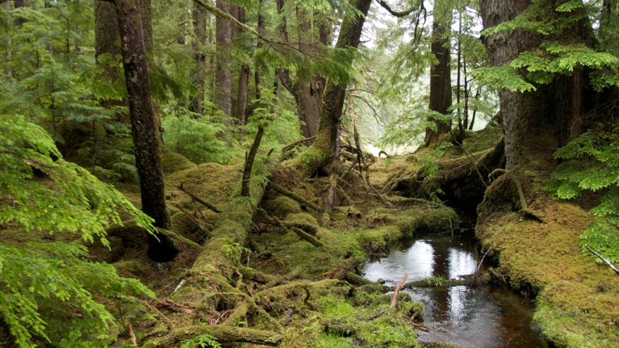 Gwaii Haanas National Park Reserve and Haida Heritage Site, Canada