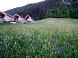 Glimpse oflooming fields in Weissensee, Carinthia, Austria