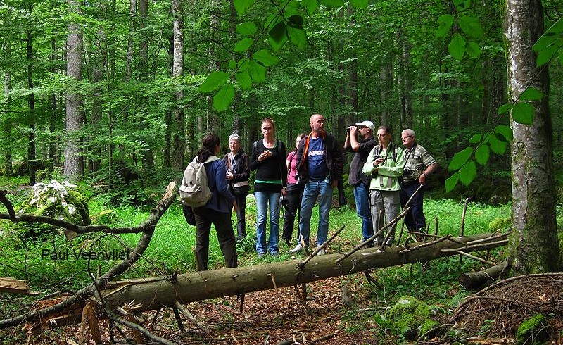tour guidato foresta in slovenia