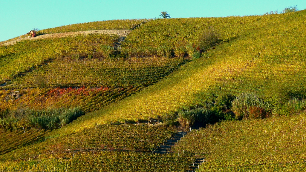 Colors in Langhe, ph. by Borghy52, via Flickr