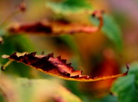 Leaves, ph. by Vincenzo_1949, via Flickr