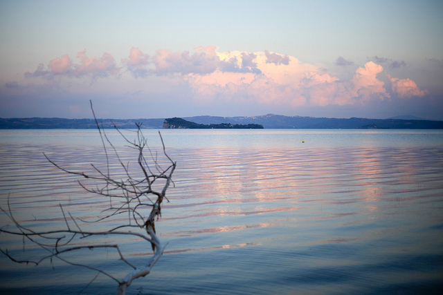 A branch crops up from the Lake of Bolsena; on the background there is a little island at the center of the lake