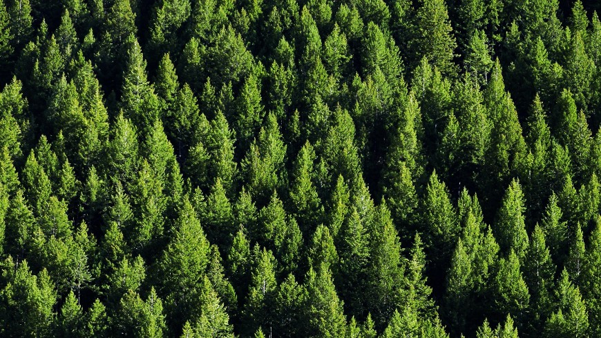 Save the trees with Ecobnb