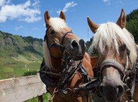 Travelling by carriage (or sled) horse drawn Plan, Passeiertal, Southtyrol