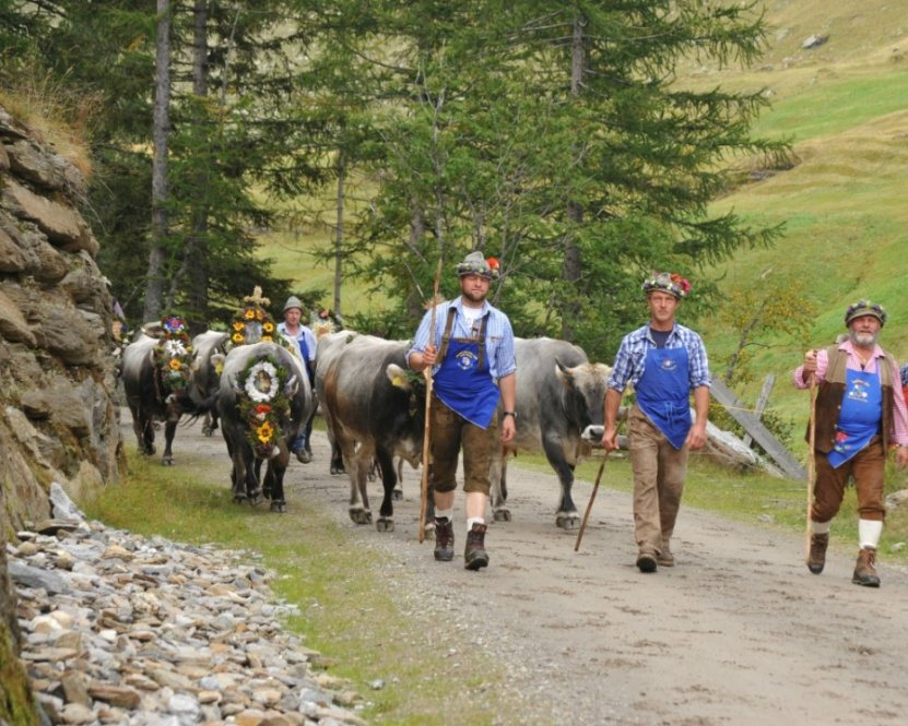 traditional festival in Val Passiria: return of the cattle, Plan, Val Passiria