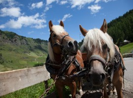 Carriage in Plan, Passierthal, South Tyrol