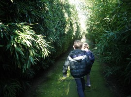 Glimpses of the largest maze in the world