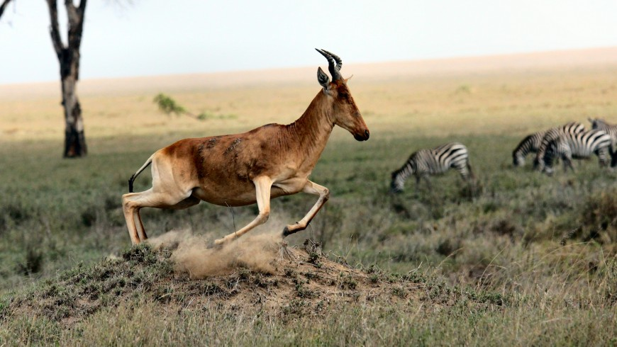 Serengeti, one of the most beautiful national parks in the world