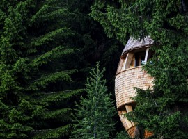 A new tree house in Friuli Venezia Giulia