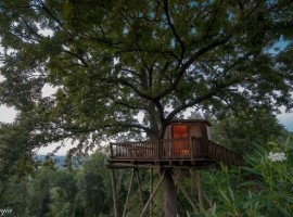 Tree house La Prugnola, in Tuscany