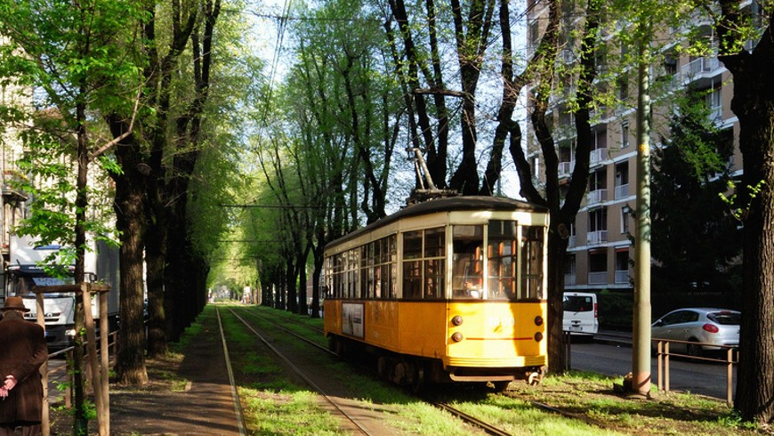 Yellow tram driving through a street of elm trees - 180 of them were taken down in 2013. Urban green in Milan.