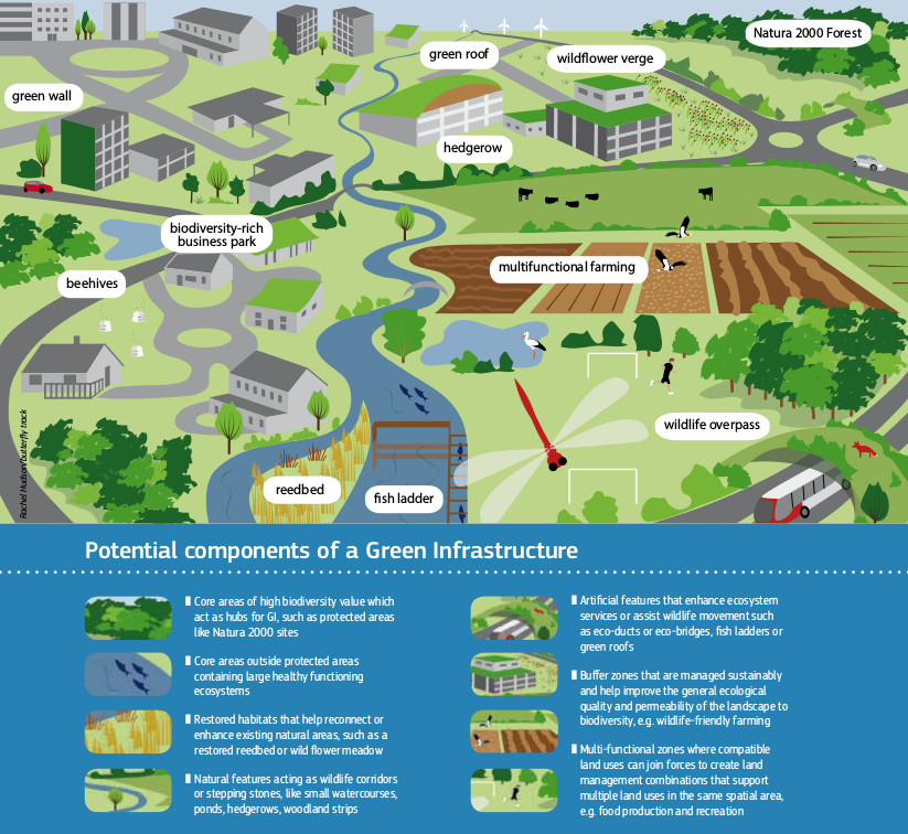 "The Urban Green Infrastructures include the natural and semi-natural areas, and other environmental elements, that allow the people living in a city to benefit from many services, concerning health, quality of air, climate, etc. The image, which shows the potential components of a Green Infrastructure, is taken from""Building a Green Infrastructure for Europe"", via ec.europa.eu"