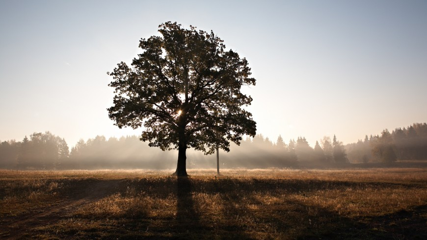 A tree standing alone - let's save our trees for a green world, photo by Roman Averin via Unsplash