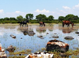 Horses of the Giara, photo by Il Giardino di Valentina