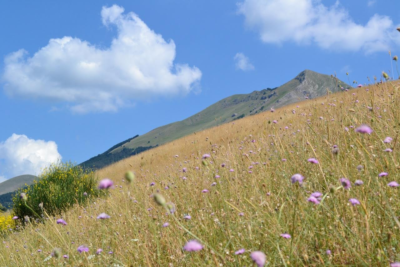 Spring among the peaks of the Lucanian Apennines