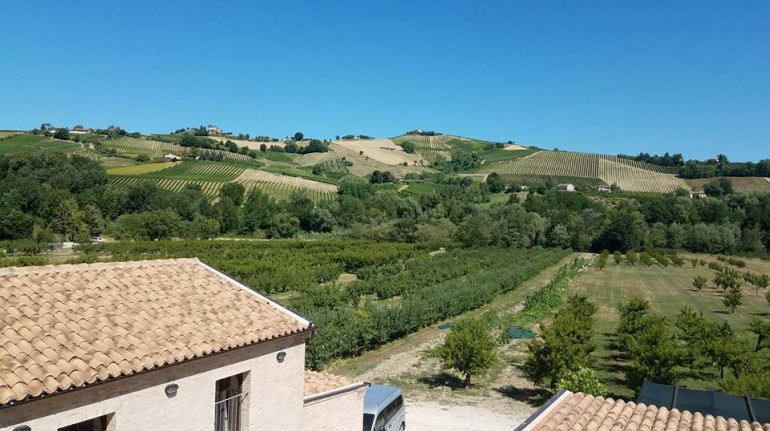A green weekend among the vineyards of Marche region