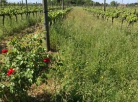 Country air and the scent of wine a few kilometers from Venice