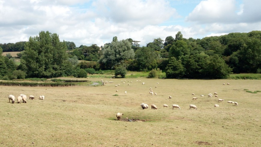 Land scattered with sheep on the countryside of the Wiltshire, in England