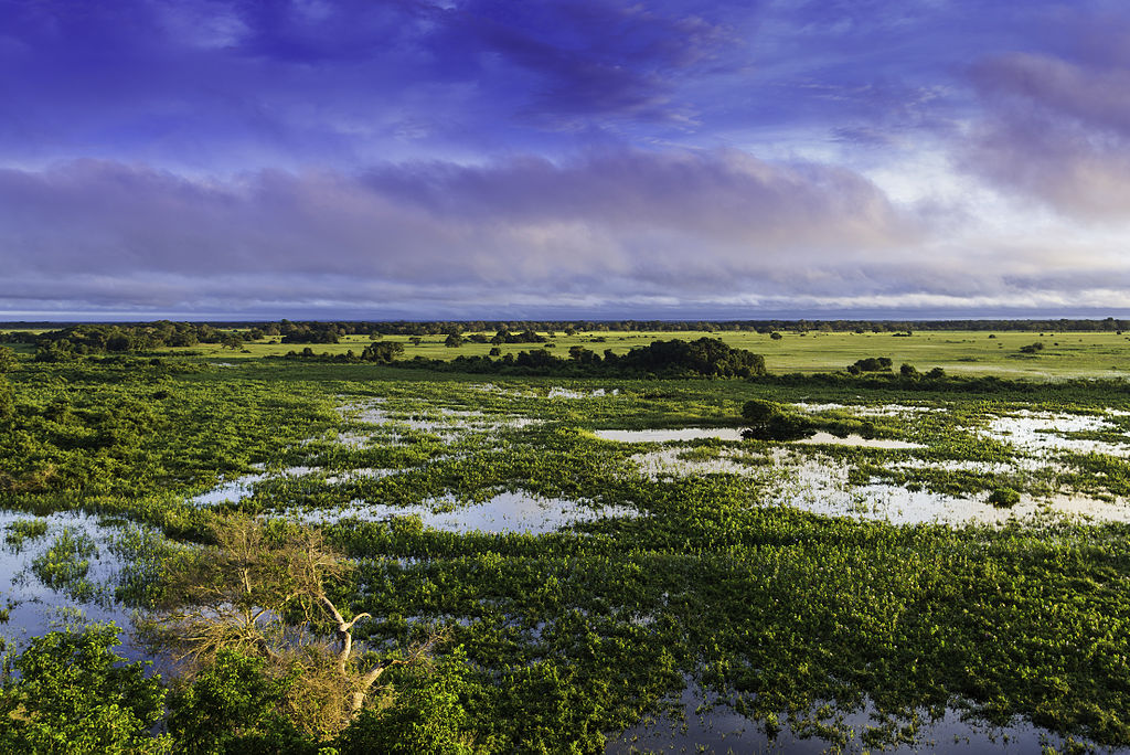 Natural Landscape of Pantanal, Brazil,