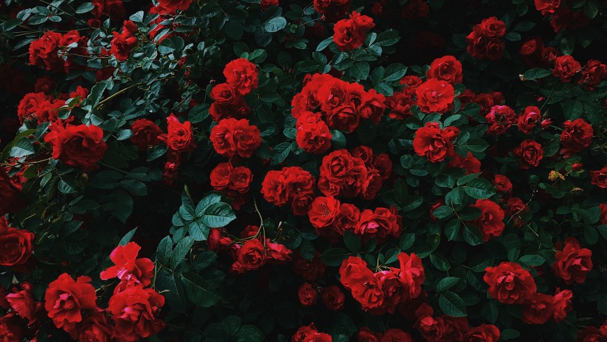 Give a weekend among the roses