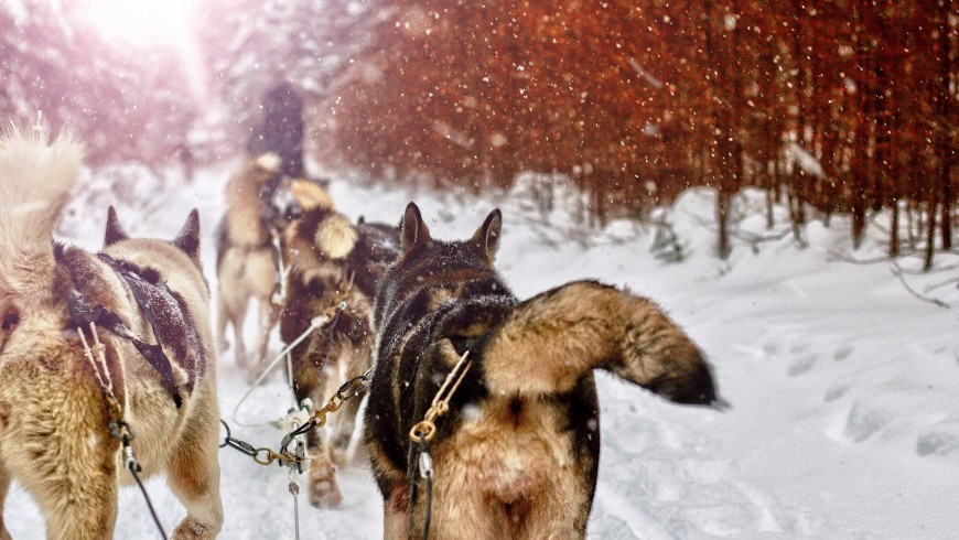 Learn to drive a dog sled