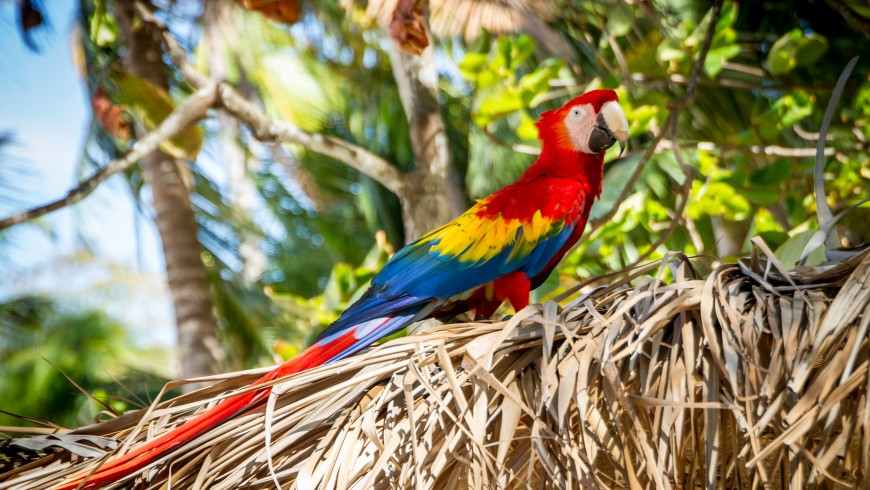 Costa Rica among the best destinations for eco-travelers for 2019