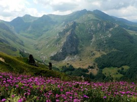 Flowers, mountain