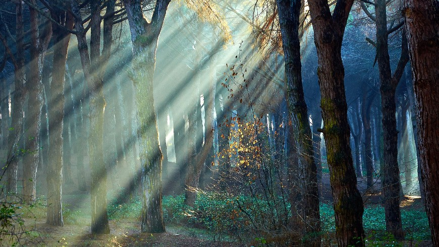Sunset and light in the forest through trees