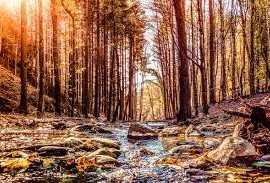 Forests, casentino