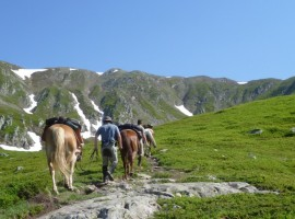 horse carrying load in the alps slow tourism