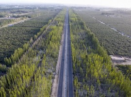 The Great Green Wall by the highway