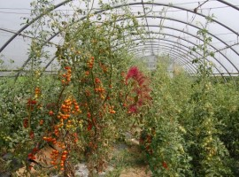 A beautiful greenhouse full of organic products