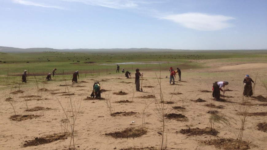 Team of people working to fight desertification