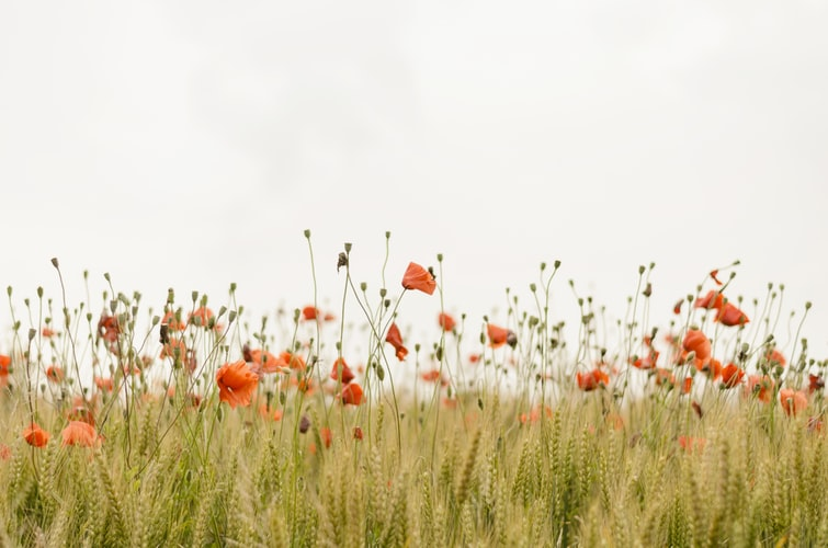 flowers in the field to not use pesticides