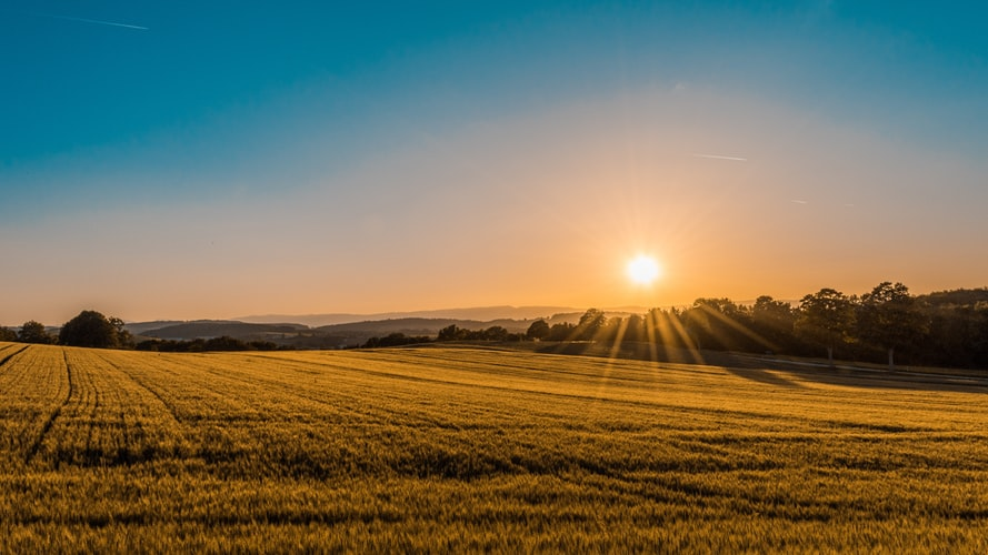 Sunset and biological agricultural