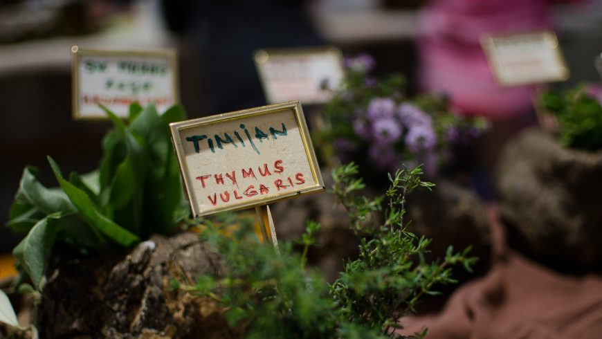 Wild plant Festival Kršan_ eco-friendly events in Istria