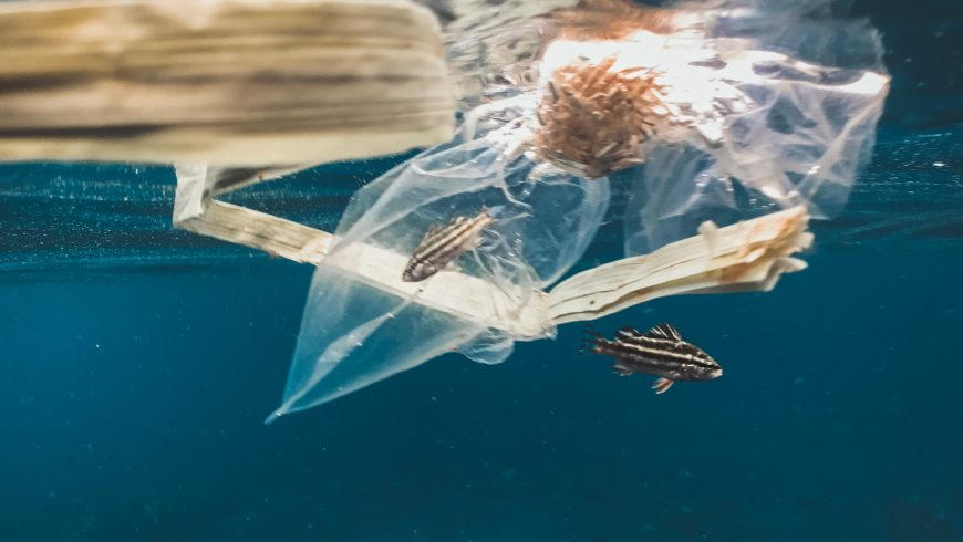 endangered animals trapped by plastic waste in the sea